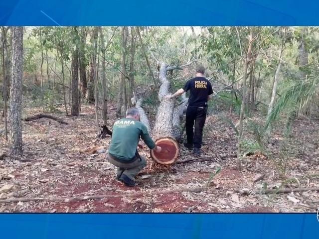 Operação do IBAMA, PF e Funai flagra crimes ambientais em área protegida em MS