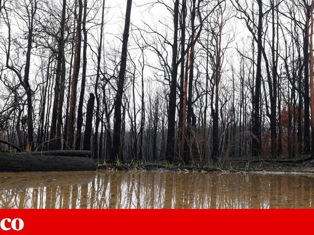 Austrália: depois dos incêndios, vieram as inundações — e uma nuvem de poeira
