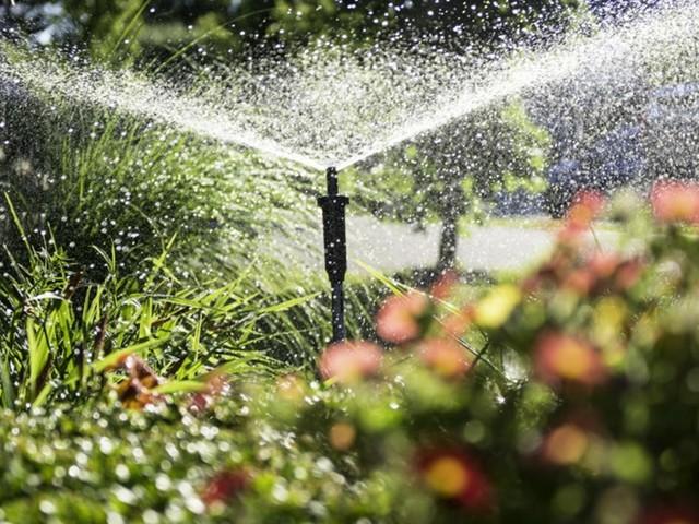 Wie helfen Sie Ihrem Garten durch einen trockenen Sommer?