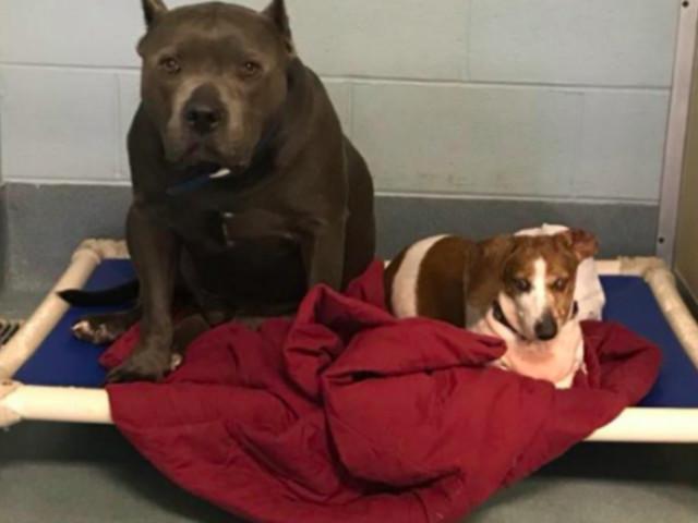 Frau rettet Hunde aus Tierheim – die Pfleger wünschten, sie hätte es nie getan