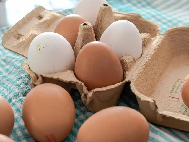 Skandal um Gift-Eier: Jeder Vierte hat Eierkonsum wegen Fipronil verändert