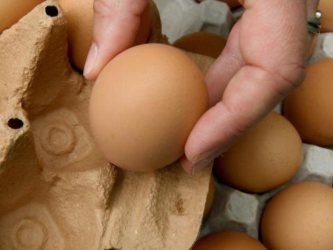Großer Rückruf bei Aldi, Lidl und Netto: Viele Eier mit Salmonellen verseucht