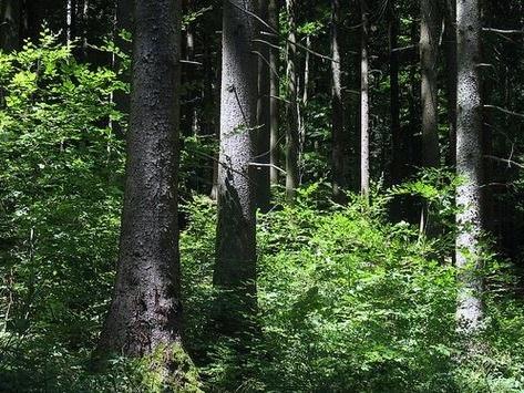 Zwei Kollegen verirren sich – Suchaktion bei Lehrerausflug im Schwarzwald