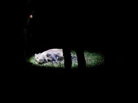 Eine Nacht an der Frontlinie einer Seuche