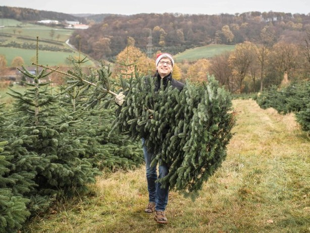 Weihnachtsbaum: Der Traum vom selbst geschlagenem Weihnachtsbaum