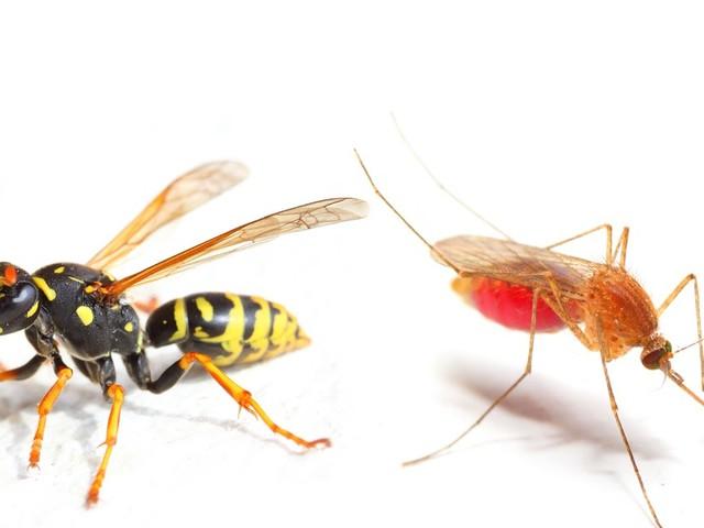 Mehrheit findet Insektensterben okay, solange Wespen und Stechmücken auch dran glauben müssen