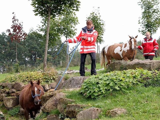 Herbstein - Training extrem: DRK-Reiterstaffel zu Besuch im Extreme Trail Park Herbstein
