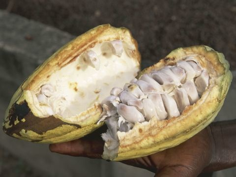 Kuriose Produktneuheit: Ritter Sport bringt Kakao-Limo auf den Markt