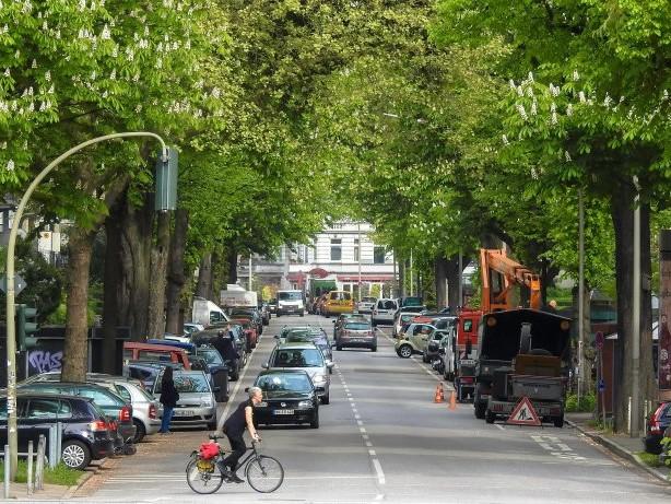 Baumbilanz: Warum an Hamburgs Straßen alle Kastanien sterben werden