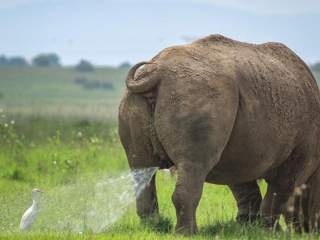 Tiere: 11 Fotos, die zeigen, wie lustig es in der Natur manchmal zugeht