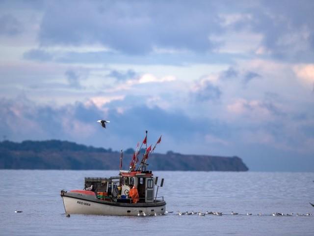 Dorsch- und Hering-Quoten für 2020: Ostsee-Fischfang um mehr als die Hälfte reduziert