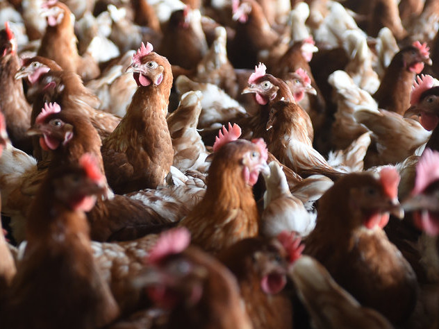 Ermittlungen in Niedersachsen: Steuerfreie Boni für Tierärzte