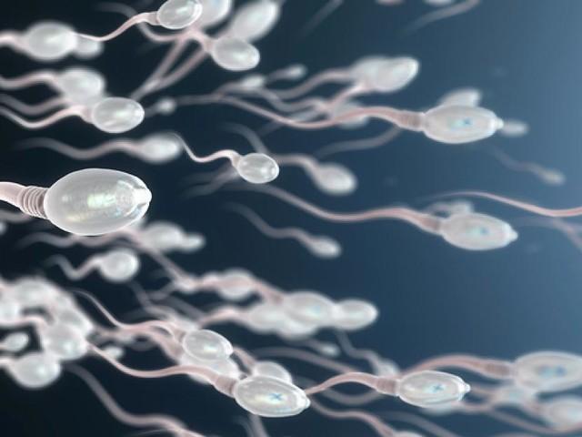 WISSEN - Sperma-Alarm