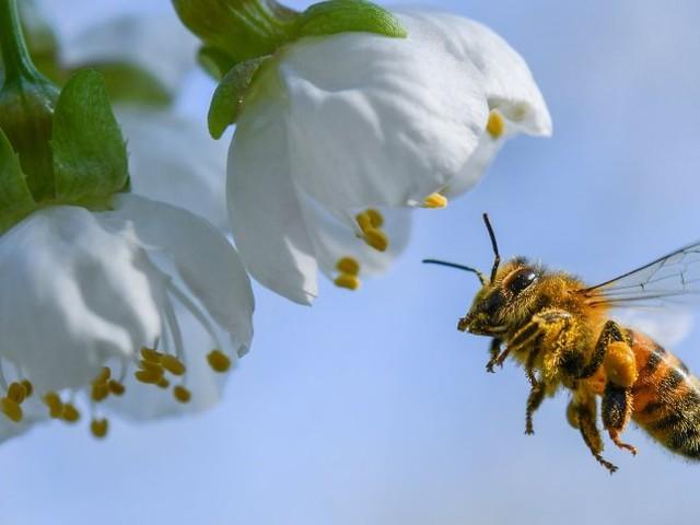 Aktuelle Studie: Glyphosatsoll Ursache für Bienensterben sein