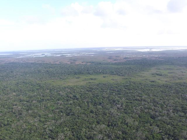 Burgers' Zoo baut grüne Brücke: Naturschutzgebiet in Belize wächst um 15.000 Fußballfelder