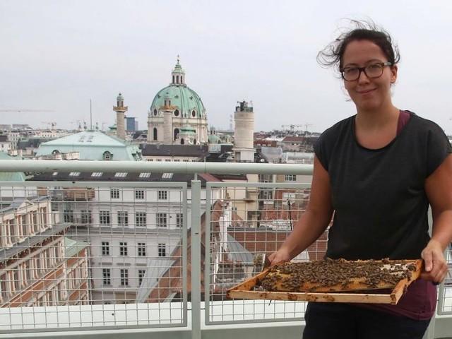 Imkern in Wien: Süßes Summen über den Dächern