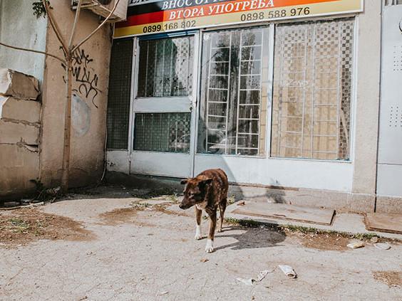 Ehrenamt, das Tierleben rettet – ein Besuch bei der Streunerhilfe Bulgarien