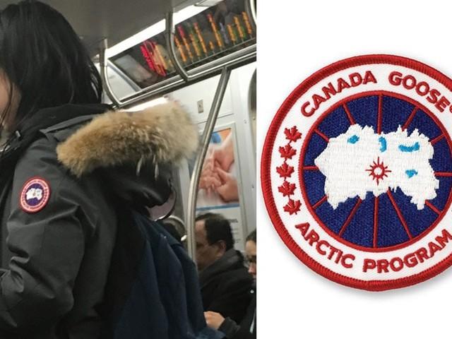 Eine Schar dummer Gänse in Canada Goose