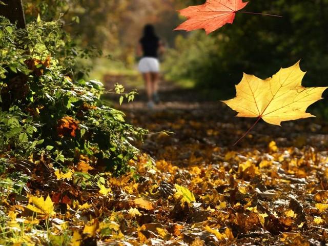 Wohin verschwindet das Laub, das im Herbst von den Bäumen fällt?