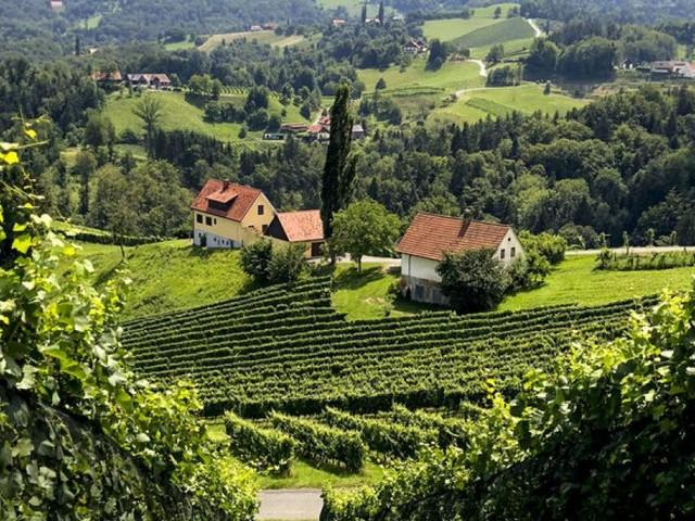 Immobilienhotspot Südsteiermark: Preise steigen rasant