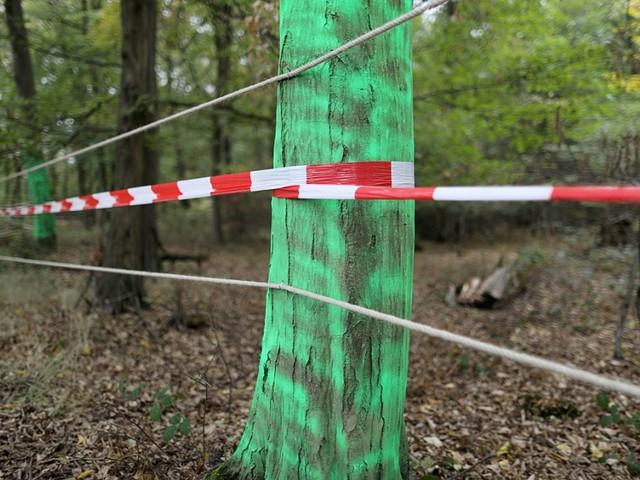OVG-Urteil: Gericht stoppt Rodung im Hambacher Forst