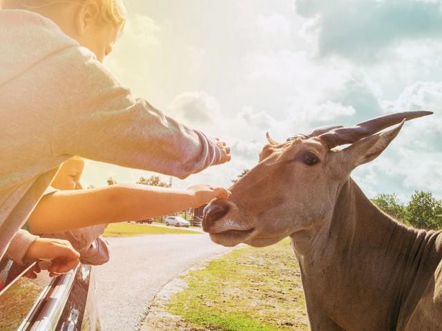 Impfaktion am Safariland Stukenbrock: Corona-Impfung wird mit Gratis-Ticket belohnt