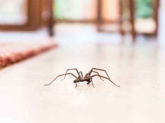 Ratgeber: Spinnen im Haus - 5 effektive Tipps