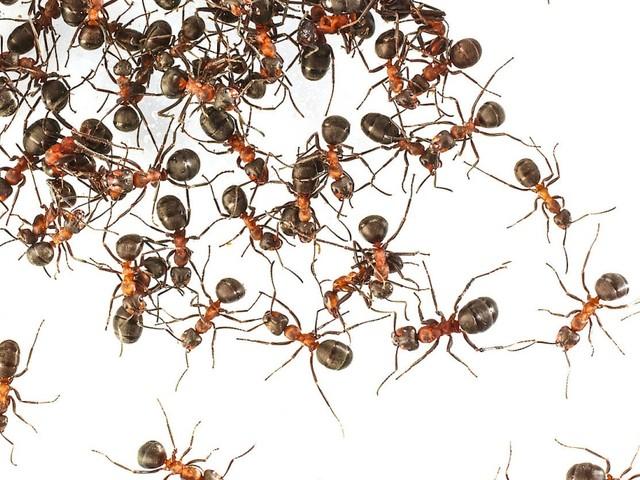 Insektizide sollen künftig nicht mehr frei verkauft werden