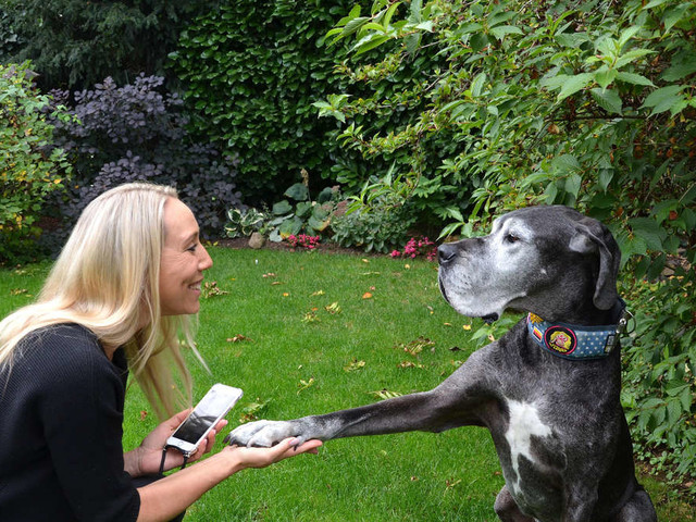 Traurige Instagram-Nachricht zu tierischem Star aus der Wetterau: Dogge Ella ist tot