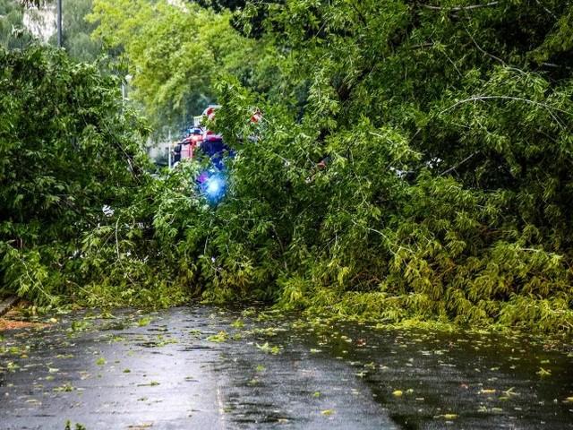Unwetter in Blankensee: Hochzeitsgäste durch herabstürzenden Ast verletzt