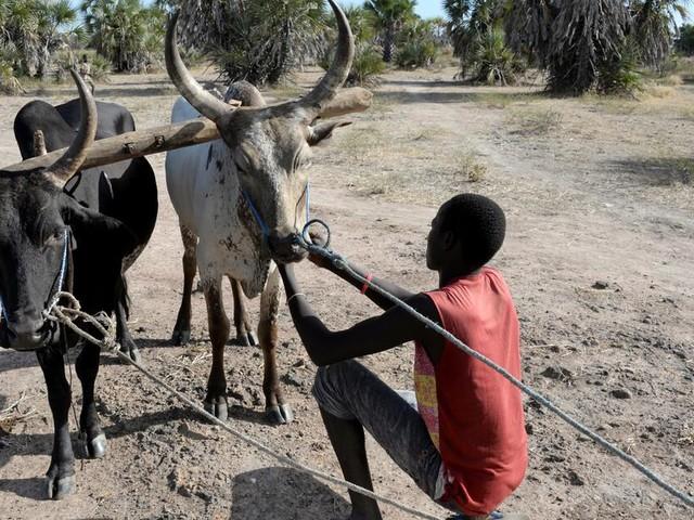 """""""Brandbeschleuniger"""" Corona: Droht einer Milliarde Menschen Hunger?"""