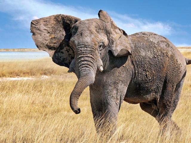 """Weg frei für die Rückkehr der charismatischen Tiere: George Monbiots Buch """"Verwildert"""""""