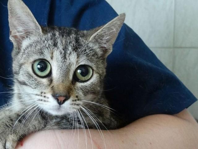 Im Karton ausgesetzt: Katzen starben beinahe den Hitzetod