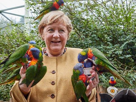 """Vogelpark Marlow: Nur beim Uhu sagte Merkel """"Nein"""""""