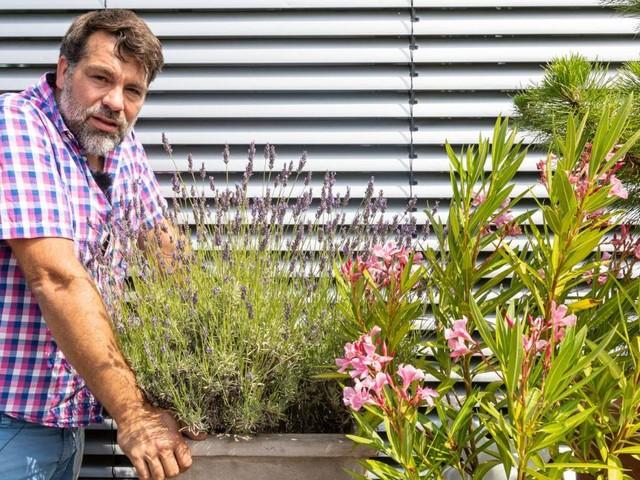 Axels Terrasseneintopf: Diese Balkonpflanzen trotzen der Hitze