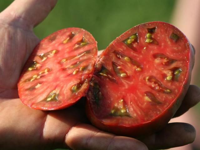 Das Paradeiser-Projekt: Profi-Tipps für eine gute Tomatenernte