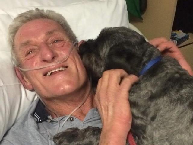 +++ Gute Nachrichten +++ - Hund weckt sein Herrchen aus dem Koma auf - und ist seitdem als Heiler gefragt