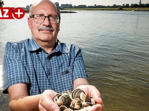 Rhein: Warum es asiatische Muscheln im Rhein bei Duisburg gibt