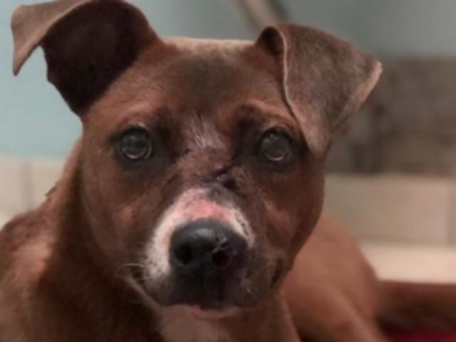 USA: Familie findet Hund mit Pfeil im Kopf – dann geschieht ein Wunder