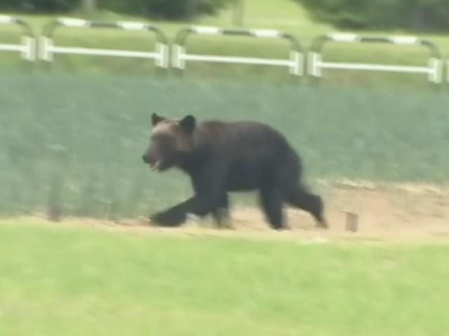Wilder Bär zieht durch Millionen-Metropole: Vier Menschen verletzt!