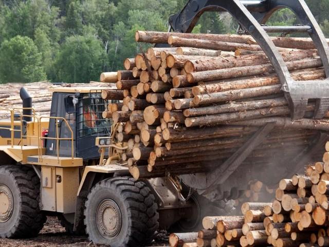 Klimaretter? Müllschlucker? Der Kampf um den Wald beginnt