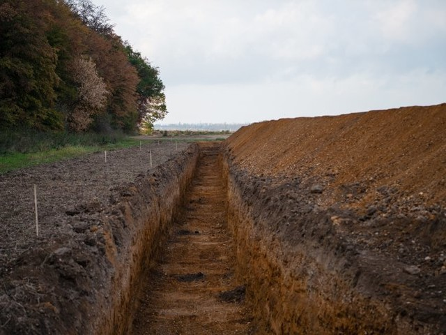 Münster: Gericht stoppt vorläufig Rodung im Hambacher Forst