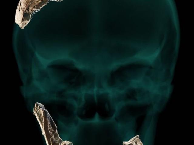 Paläoanthropologie: Knochen eines unbekannten Urmenschen in Israel gefunden