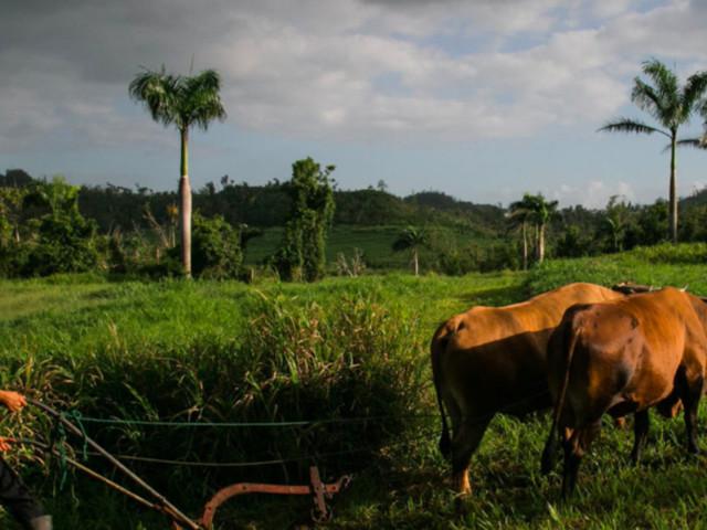 Hurrikan Maria verwüstete Puerto Rico – so unglaublich erholen sich die Wälder