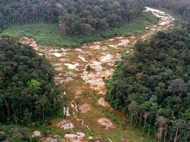 """Zustand der Tropenwälder weltweit """"dramatisch"""""""