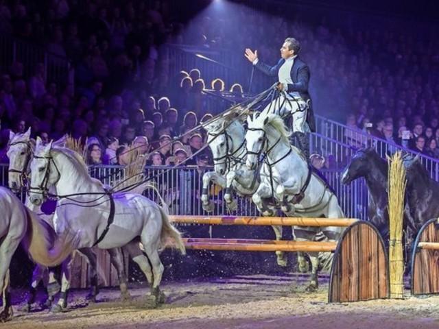 """Die """"Nacht der Pferde"""" begeistert 3500 Fans auf dem Messegelände"""