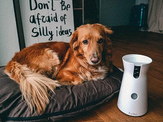 FURBO – die weltweit erste Hundekamera, die Leckerlis wirft