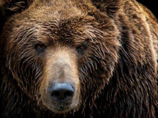 Horror-Angriff in Kanada: Bei der Arbeit überrascht! Bär zerfleischt 26-Jährige zu Tode