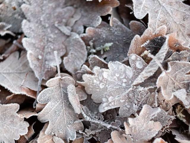 Wetter in Deutschland: Meteorologe warnt vor Bodenfrost und Temperatursturz