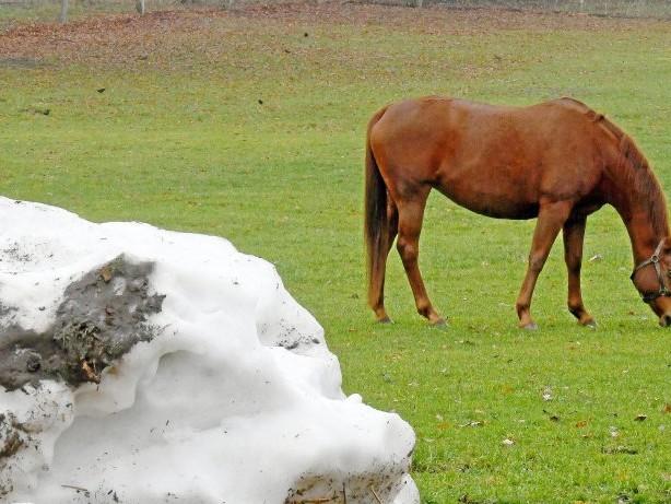 Misshandlung: Pferd vergewaltigt – überführt Täter sein eigenes Sperma?